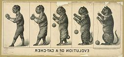 1889 Photo Evolution of a cat-cher / lith. H.S. Crocker & Co